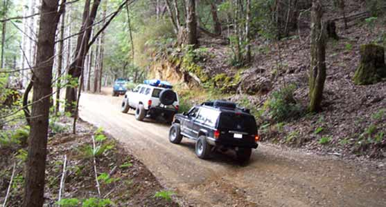 Trail (30K)